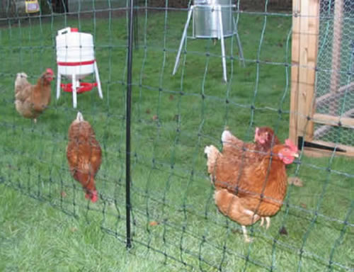 Poultry Netting Enclosures